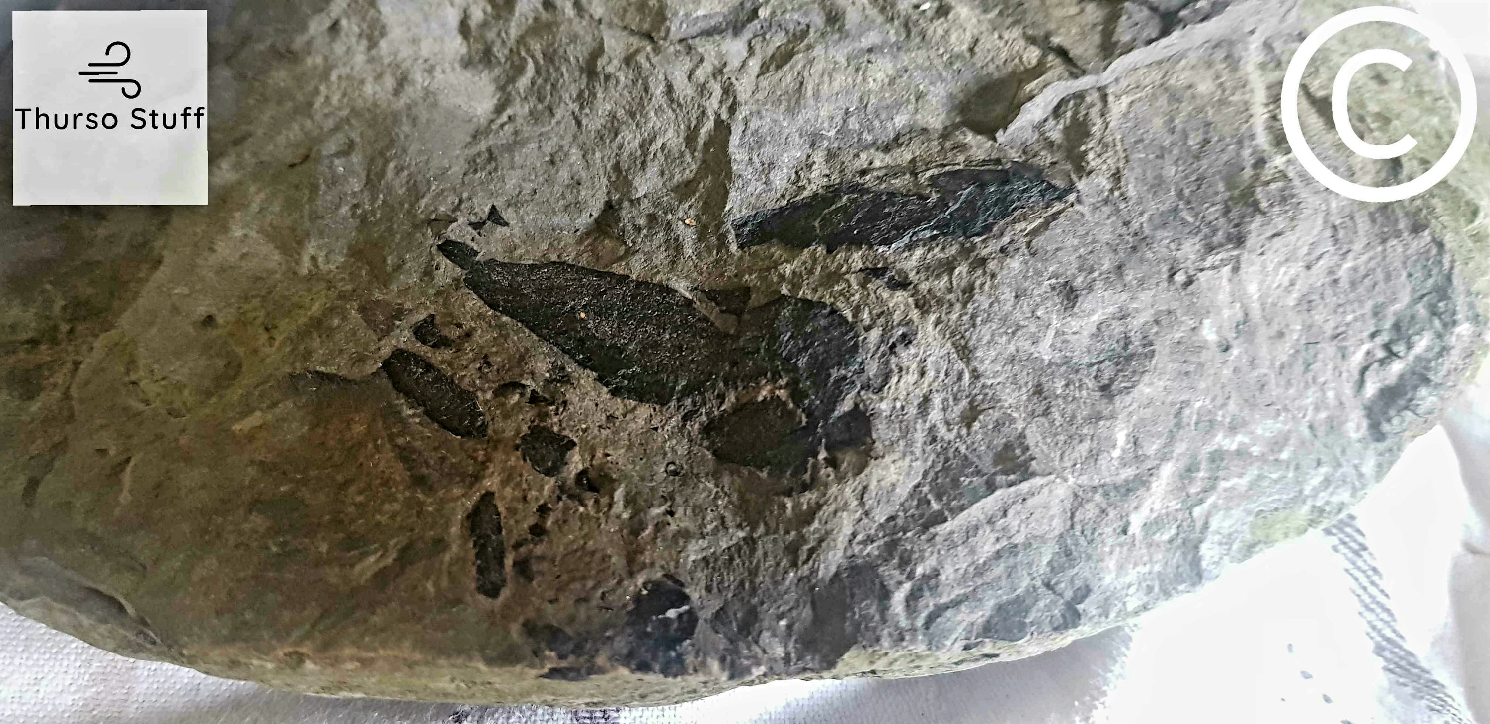 a black fish fossil on a grey rock